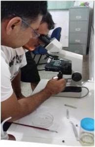 viriato microscópio